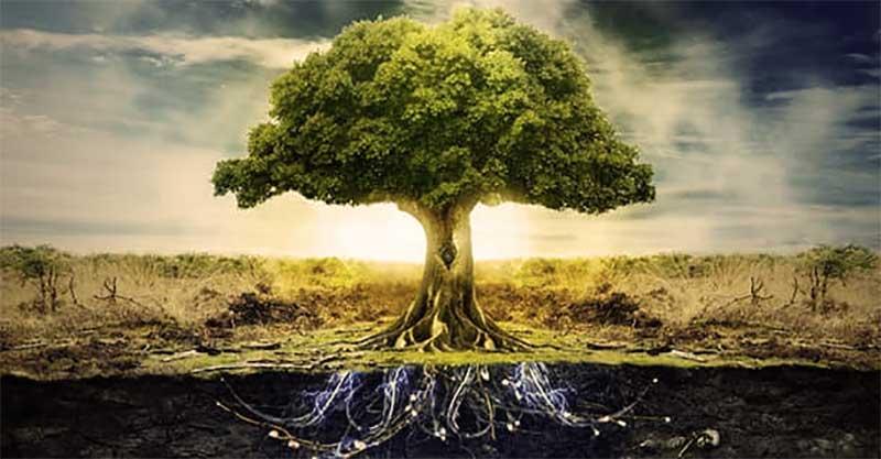 El árbol De La Vida Quieres Saber Cual Es Su Significado